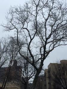 Winter in New York City http://runwright.net