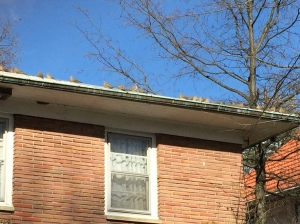 Birds on a roof http://runwright.net
